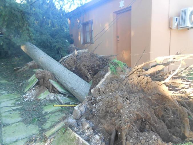 Uprooted tree next to tahara house at the Jewish cemetery in Ioannina, Greece. More photos at http://www.jewish-heritage-europe.eu/2015/01/05/jewish-cemetery-in-ioannina-greece-damaged-by-storm/%E2%80%9D